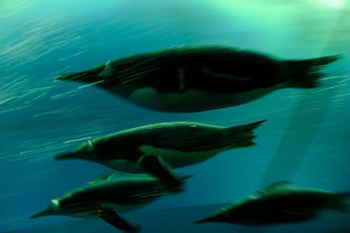 20110602 Nagoya Aquarium 7 (Flying in the water)