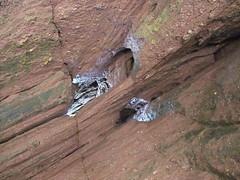 Hopewell Rocks