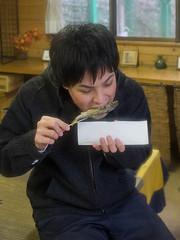eating grilled ayu (kasa51) Tags: fish japan riverside ayu izu  freshwatertrout
