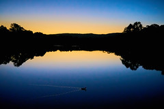 Lonely Duck (RobMacPhotography) Tags: canberra act australia duck lonely sunset reflection pond water ripples silhouette lake trees venus star swimming bonython sony a6000 rob mac photography landscape outdoors clear skies sky stranger serene tranquil