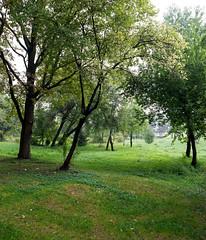 Urban oasis (elkarrde) Tags: city cityscape nature trees green urban urbanlandscape urbanoasis zagreb october 2015 october2015 autumn autumn2015 nikon fullframe d600 nikond600 nikkor 24mm wideangle nikonafnikkor24mm128 nikkoraf24mmf28 nikkoraf2428 2428 camera:brand=nikon lens:brand=nikon lens:brand=nikkor lens:mount=f camera:mount=f camera:model=d600 lens:format=135 camera:format=135 lens:maxaperture=28 lens:focallength=24mm lens:model=afnikkor24mm128 twop
