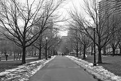 Boston Common (Boston) (Doncardona) Tags: common park boston massachusetts usa united states north america worldtraveler jpworldtraveler travel trip adventure journey nikon nikon3100 3100 ngc bw blackandwhite black white