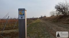Küstenweg in Rheinhessen