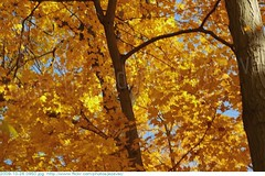 2009-10-26 0950 Fall in Indiana - Holliday Park, Indianapolis Indiana (Badger 23 / jezevec) Tags: park autumn trees orange tree green fall nature leaves yellow forest season arbol leaf log woods timber indianapolis herbst indiana boom foliage environment otoo  arvore holliday albero autunno arbre 2009 strom baum outono puno treet  pokok  aa koks   copac   drzewo  jezevec mti medis arbore crann drevo cy     auomne   deherfst badger23 20091026 sira