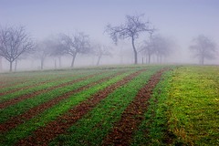 Fields of coral (Antti-Jussi Liikala) Tags: shadow brown mist tree green apple field silhouette fog d50 germany nikon purple dusk horizon ghost bad soil agriculture neckar rottenburg niedernau vanagram