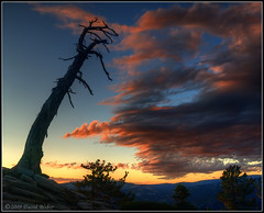 Sentinel Dome Tree III (DM Weber) Tags: sunset tree snag sentineldome yosemitenp dmweber