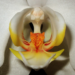 Orchid - close up (FarhadFarhad .(Farhad Jahanbani)) Tags: flower macro nature up canon close orchids g11 canong11