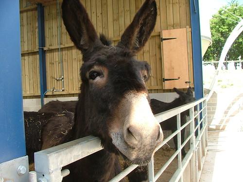 Donkey by miss_naughty.