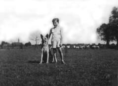 """""""Le Bon Pasteur"""" (Pierre♪ à ♪VanCouver) Tags: meandmydog monchien imagine johnlennonpassingremmbered mons jemappes belgique belgie germanshepherd 私の犬"""