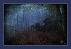 Winter Colors III (andzer) Tags: night flora nikon scout andreas explore scape 2009 zervas andzer wwwandzergr