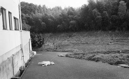 CC01411F東区.道路で寝る犬