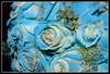 blue flowers blue bouquet wedding photo