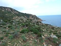 Le sentier vers la tour de Santa Manza après les plages : le replat en vue du cap rocheux