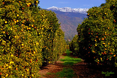 orange grove mountains (artfilmusic) Tags: ca orange mountains grove ojai topa anawesomeshot