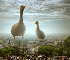 I Have Also Seen This in Paris :D (Ben Heine) Tags: camera old city light wallpaper sky people urban paris france art tourism scale monument nature strange birds animals architecture clouds composition poster lens landscape fun photography geese duck big scary nikon europe european dof d70 cloudy pov earth lumire lol surrealism space horizon crowd perspective creative manipulation montmartre aliens godzilla ciel freak montage horror huge foule conceptual visitors creature invasion bizarre emptiness ville canard oiseaux vide marsattack alfredhitchcock oie chelle duckzilla topseven villelumire benheine infotheartisterycom