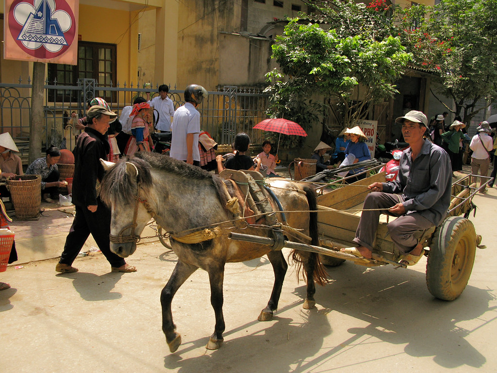 Bac Ha Market : A horse and cart arrive to carry the heavy stuff back into the hills. Vietnam