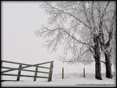 ...a foggy winter day at Frog Gap. (westrock-bob) Tags: county winter snow canada cold tree beauty grey three gate day gray foggy gap bob ab canadian frog hills alberta campground frigid allrightsreserved westrock canadien 2010 cuthill kneehill westrockbob vosplusbellesphotos bobcuthillphotographygmailcom