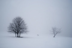 Winterberg, Germany, 2010 (lambertwm) Tags: schnee trees winter mist snow silhouette misty fog germany blackwhite empty hiver foggy peaceful mistig winterberg leeg alpineskiing vredig treesubject themewinter feb2010
