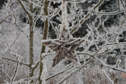 Winter Star (Photo by iHanna - Hanna Andersson)