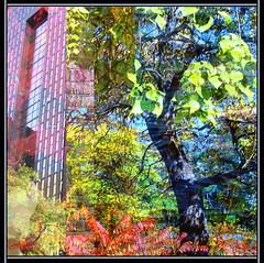 Urban Tree (Tim Noonan) Tags: building tree art leaves digital photoshop award manipulation rgb legacy shining hypothetical artdigital trolled exploreworthy newreality maxfudge awardtree maxfudgeexcellence miasbest maxfudgeawardandexcellencegroup daarklands flickrvault trolledandproud magiktroll exoticimage