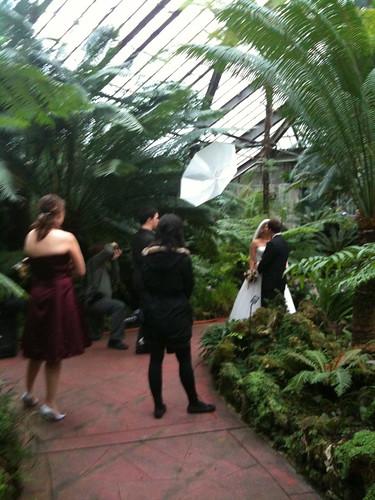 In the fern room