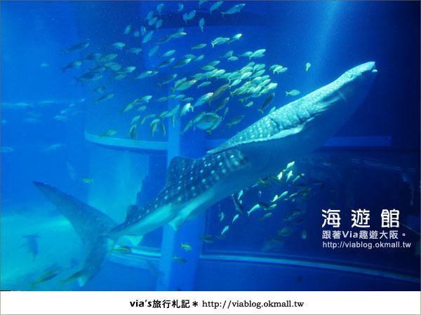 【via關西冬遊記】世界最大極的水族館~大阪海遊館