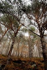 Fog' s Embrace (Berto Means Berto  bertomeansberto@gmail.com) Tags: wood mountain tree nature rain fog forest nikon path d200 nebbia sentiero albero pioggia bosco foresta valledaosta valledaoste fabiobertuzzo bertomeansberto inaltoorg primevalforestgroups