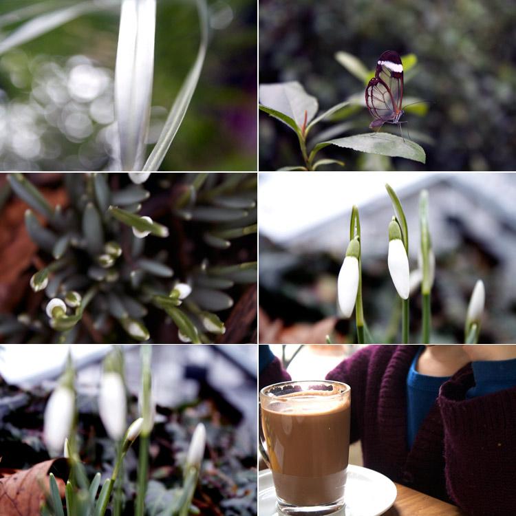 springcroquis