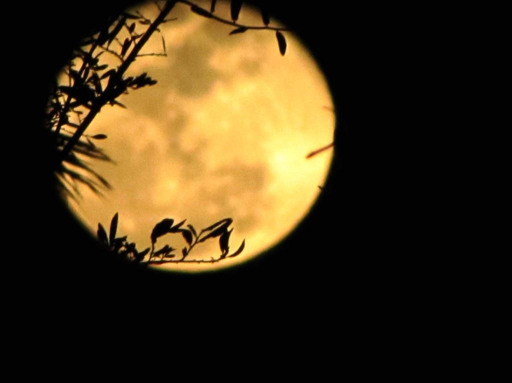 moon 3/1