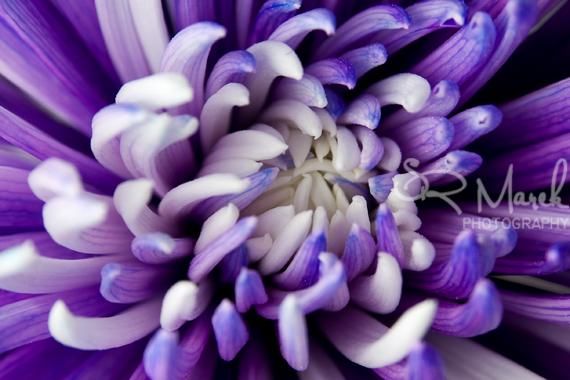 Flower3rs