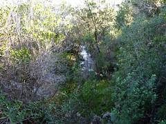 Exploration du sentier Nord de Porto Novo : traversée d'un ruisseau très actif eau + maquis !!