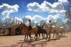 La tropilla (Eduardo Amorim) Tags: horses horse southamerica criollo caballo uruguay cheval caballos cavalos pferde herd cavalli cavallo cavalo gauchos pferd pampa hest hevonen chevaux gaucho  amricadosul hst uruguai gacho  campero amriquedusud  gachos  sudamrica suramrica amricadelsur  sdamerika gregge crioulo troupeau caballoscriollos herde criollos  tropillas  camperos americadelsud tropilhas tacuaremb tropilla  crioulos cavalocrioulo americameridionale tropilha caballocriollo campeiros campeiro eduardoamorim cavaloscrioulos iayayam yamaiay fiestadelapatriagaucha departamentodetacuaremb pampauruguaio pampauruguaya