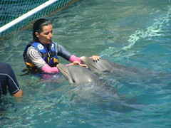 dolphin training workshop (ABC Dolphin Trainer Academy) Tags: dolphin manatee cancun trainer islamujeres trainingsession dolphindiscovery animaltraining dolphintrainer positivereinforcementtraining entrenamientorefuerzopositiva entrenadordedelfines