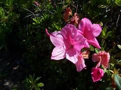 Garden Blooms March 15, 2010 - 3