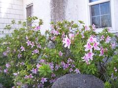 Garden Blooms March 15, 2010 - 6
