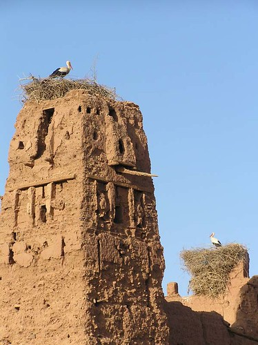 Storks on kasbah