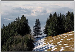 The snow is melting (pergi28) Tags: trees winter snow forest germany spring blackforest