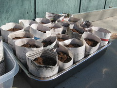 seed starting - happy in the sun