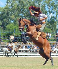 Gaucho y pico (Eduardo Amorim) Tags: horses horse southamerica caballo uruguay cheval caballos cavalos pferde cavalli cavallo cavalo gauchos pferd pampa hest hevonen chevaux gaucho  amricadosul hst uruguai gacho  amriquedusud  gachos  sudamrica suramrica amricadelsur  sdamerika jineteada   americadelsud gineteada tacuaremb  americameridionale eduardoamorim iayayam yamaiay fiestadelapatriagaucha departamentodetacuaremb pampauruguaio pampauruguaya