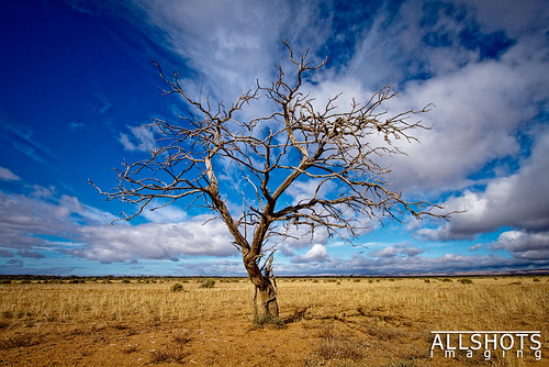 Portrait of a Tree - Wide Angle by Allshots Imaging, on Flickr