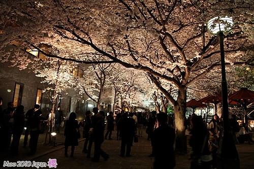 白川祇園-夜櫻6
