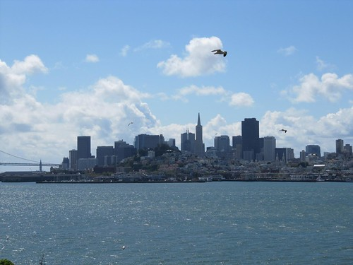 San Francisco skyline seagulls 5873