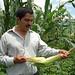 CIMMYT partner examines ear of giant Jala maize landrace