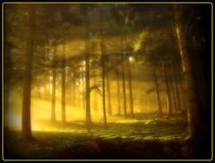 Erbland - magical morning light (NPPhotographie) Tags: wood morning sun tree art nature forest sunrise germany magic creative magical oberberg