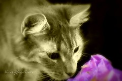 The Smell of Summer... (KrazyBoutCats) Tags: cats pets animals kittens felines bestofcats catsflowers