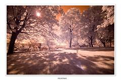 Morning (Bruce Shapka) Tags: morning ir nikon guelph d300 felixtrio