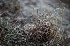 DSC02458_1 (Michael Rasmussen) Tags: michaelrasmussen minoltaamount sony sonya99 sonyalpha wabisabi winter røsnæs