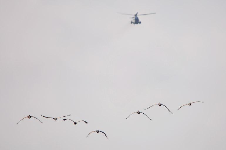 geese_chopper_0016