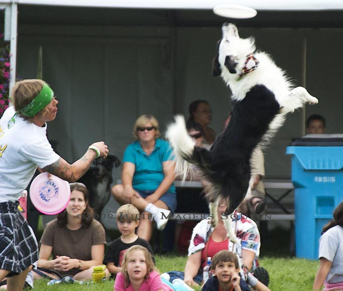 A dog jumps high to catch a frisbee.