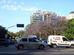 Spring in Buenos Aires (Ana Isabel Ramos) Tags: primavera spring buenosaires jacaranda